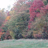 autumn leaves at elk waller