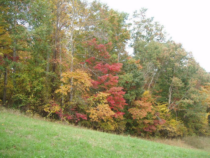 early color at the farm