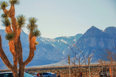In Red Rock Canyon, 7 miles west of Las Vegas