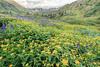 American Basin Wildflowers 4