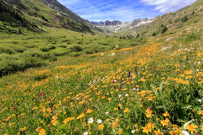 American Basin Wildflowers 1