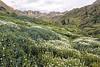 American Basin Wildflowers 7
