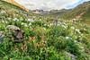 American Basin Wildflowers 8