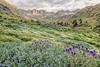 American Basin Wildflowers 5