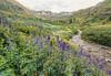 American Basin Wildflowers 6