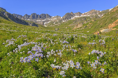 American Basin Wildflowers 2
