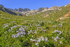 American Basin Wildflowers 2