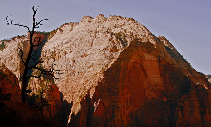 Lonely Tree, Angels' Landing