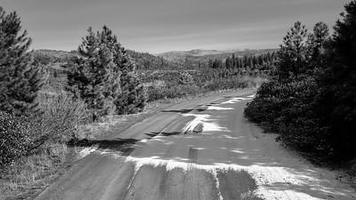 Frozen Road Tree Shadows 0895bw