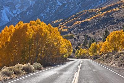 Autumn Gold Road 2418