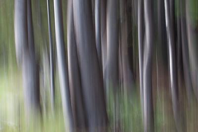 SloMo Pines 7978