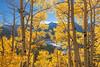 Rocky Mountain Fall 1045