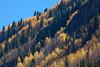 Tennessee Pass Cascade 1013