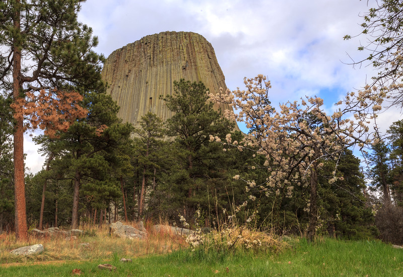 Devil's Tower in the Background