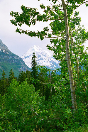 "Glacier National Park, Montana  *For information on purchasing prints and canvas gallery wraps, click the ""Purchasing"" tab at the top of the page. If viewing on your mobile device, scroll to the bottom of the page and click the ""Full Site"" tab to view as if you were on your home PC and then go to the ""Purchase"" tab to for purchasing info. In mobile mode, you will not see the standard navigation bar with the ""Purchase"" tab."