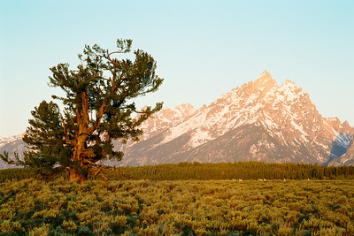 "Grand Teton National Park, Wyoming  *For information on purchasing prints and canvas gallery wraps, click the ""Purchasing"" tab at the top of the page. If viewing on your mobile device, scroll to the bottom of the page and click the ""Full Site"" tab to view as if you were on your home PC and then go to the ""Purchase"" tab to for purchasing info. In mobile mode, you will not see the standard navigation bar with the ""Purchase"" tab."