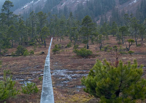 This plank walkway provides a path through the wet bog near Eaglecrest Ski Area, Juneau, Alaska. This photograph was taken in mid-May.