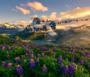 Mountain Flower Sea