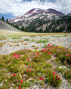 Indian Paint Brush and South Sister (Charity)