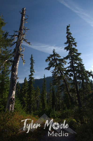 415  G Trees and Park Butte Trail V