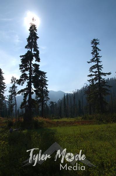 755  G Tree Shadows V