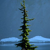 1056  G Iceberg Lake Tree V