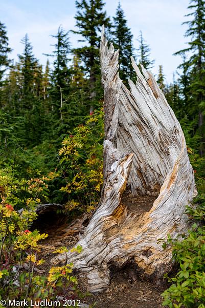 Stump at Picture Lake 09-2012