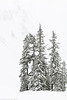 Mt Baker 12-2017