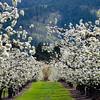 102  G Blossoms V