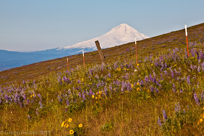 Mt Hood from The Dalles Mountain