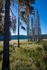 Meadow in Mt. Hood national forest