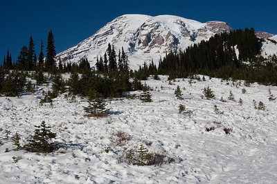 Mt Rainier from the area above the upper Paradise parking lot