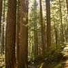 98  G Trail Sun V