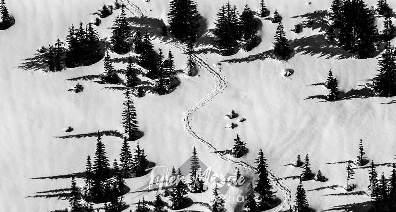 215  G Snowy Tracks BW
