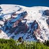 102  G Rainier and Marmot Close