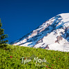 112  G Rainier and Tree