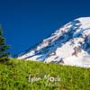 112  G Rainier and Tree