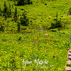 2745  G Wildflowers Trail