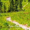 2732  G Wildflowers Trail