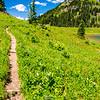 2681  G Trail Wildflowers and Yakima Peak