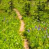 2630  G Trail Wildflowers V