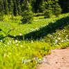 2613  G Avalance Lilies Trail