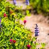 2726  G Wildflowers Trail V