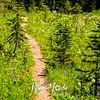 2634  G Trail Wildflowers