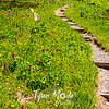 2704  G Trail Wildflowers