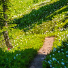 2606  G Trail Avalance Lilies V