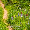 2788  G Wildflowers Trail