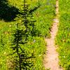 2785  G Wildflowers Trail V