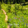 2618  G Trail Wildflowers