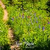 2626  G Trail Wildflowers